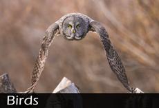 Birds Category