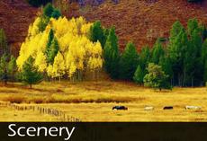 Scenery Category